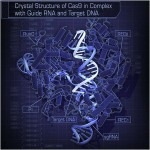 Molecular biology meets computer science tools in new system for CRISPR