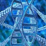 Scientists use CRISPR to edit immune cell DNA